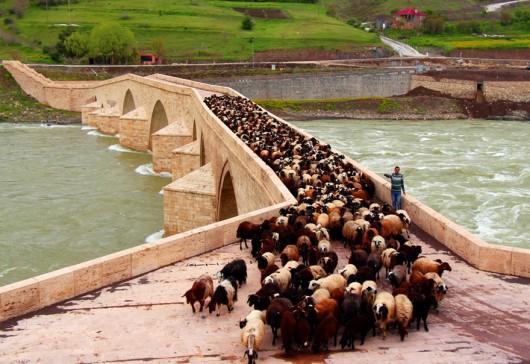 Palu Roma Köprüsü'nden Sürülerin Göç Zamanı
